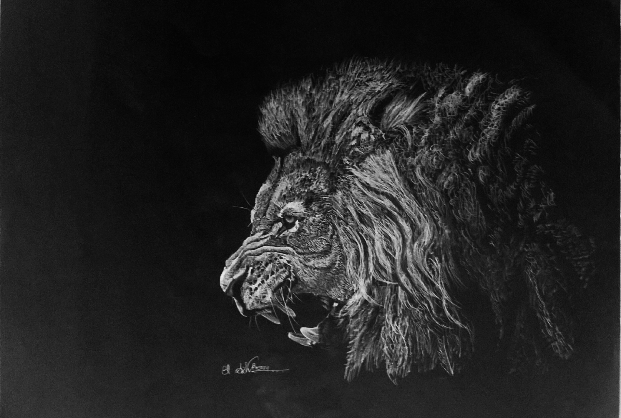 Lion Roaring Drawing Side View - photo#7